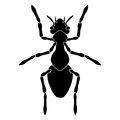 Black silhouette of an ant on a white background.