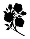 Black silhouette of roses branch with buds and leaves isolated on a white background Stock Photography
