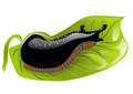 Black slugs on a green leaf eps Stock Photography