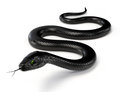 Black Snake III Royalty Free Stock Photo