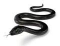 Black Snake III