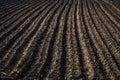 Black soil plowed field. Earth texture