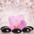 Black spa stones and flower on colorful background pink spring Stock Photo