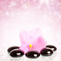 Black spa stones and flower on colorful background pink spring Stock Image