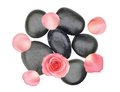 Black spa stones and pink rose with petals isolated on white Stock Images