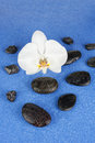 Black spa stones and white orchid flowers over blue background closeup Stock Photography
