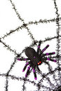 Black spiderweb Stock Images