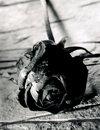 Black stone rose. Royalty Free Stock Images