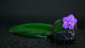Black stones with leaf, flower and water drops Royalty Free Stock Photography