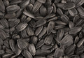 Black sunflower seeds texture or background. Royalty Free Stock Photo