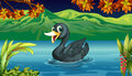 A black swan at the lake illustration of Royalty Free Stock Images