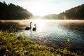 Black swan on lake Royalty Free Stock Photo