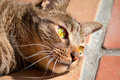Black tabby cat with green eyes in sunshine Royalty Free Stock Photo