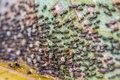 Black termites evacuate to a new place in rain forest Stock Images