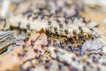 Black termites evacuate to a new place in rain forest Royalty Free Stock Photo