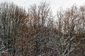 Black Trees Covered By White S...