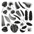 Black Tropical Leaves Collection, isolate vector. Set Royalty Free Stock Photo