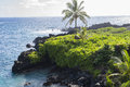 Black volcanic rock formation and greenery in Hawaii Royalty Free Stock Photo