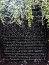 Black wall, Beautiful water drops on the black wall, Water droplets with small trees covered on black walls Royalty Free Stock Photo