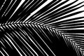 Black and white abstract background of palms leaf Royalty Free Stock Photo