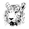Black and white bengal tiger, isolated animal face vector Royalty Free Stock Photo