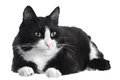 Black and white cat Royalty Free Stock Photography