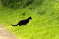 Black white cat hunting in undergrowth grass Royalty Free Stock Photo
