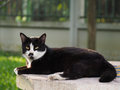 Black and white cat lying on a marble table