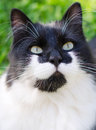 Black and white cat portrait outdoors Royalty Free Stock Image
