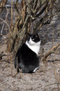 Black and white cat sitting in front of a bush Royalty Free Stock Image