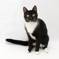 Black and white cat sitting on gray background Stock Image