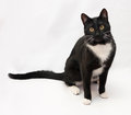 Black and white cat sitting on gray background Stock Photography