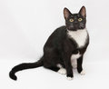 Black and white cat sitting, looking anxiously Royalty Free Stock Images