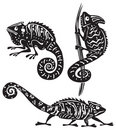 Black and white chameleon Royalty Free Stock Images