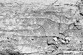 Black and white cracked texture dry rough Stock Image