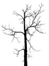 Black and white dead tree in isolated background with no leaves Royalty Free Stock Image