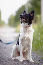 Black and white dog sits not purebred doggie on walk the not purebred mongrel Stock Photos