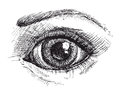 Black and white drawing of eye Royalty Free Stock Photo