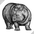 Black and white engrave isolated hippo vector illustration Royalty Free Stock Photo