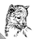 Black and white engrave wolf vector ink draw Stock Images