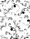 Black-and-white flower Stock Photos