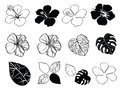 Black and white flowers of hibiscus Royalty Free Stock Photo