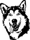 Alaskan Malamute Illustration Royalty Free Stock Photo