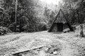Black and white image of old hut in forest Royalty Free Stock Photo