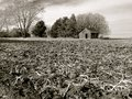 Rich, Black Soil of Illinois Farm Field After Harvest Royalty Free Stock Photo