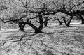 Black and white image of trees for terrifying mystery concept tree tunnel tree shadow in forest Stock Images
