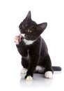 The black and white kitten licks a paw. Royalty Free Stock Photo