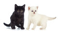 Black and white kittens Stock Images