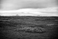 Black and white landscape of iceland lowland Stock Images
