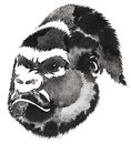 Black and white monochrome painting with water and ink draw monkey illustration